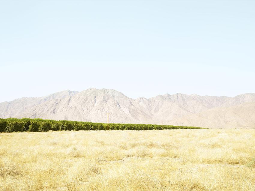 Grapefruitanbau im Borrego Valley, USA