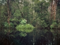 Primary Swamp Forest